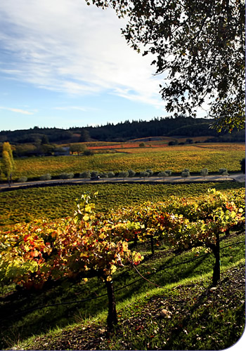 View from Francis Ford Coppola Winery Vineyard Tour