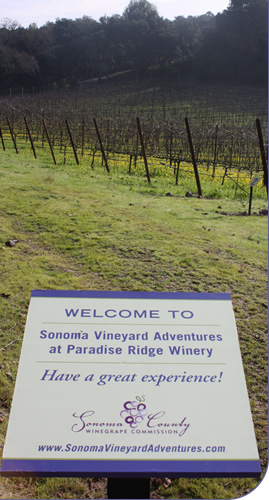 Paradise Ridge Vineyard Adventure signage