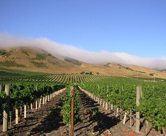 vineyard-square_0001_schug